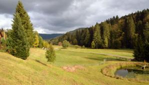 Paysage de la Foret Noire à Baiersbronn - © D. Raynal