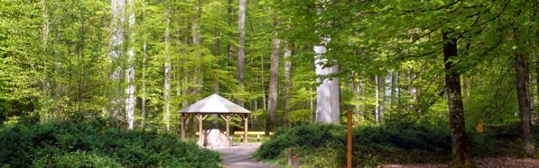 La forêt de Bercé - Vallée du loir