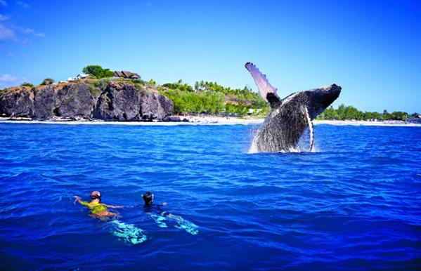 Une histoire qui unit les hommes et ces incroyables créatures marines - © J. Akhoun - Studio Lumiere