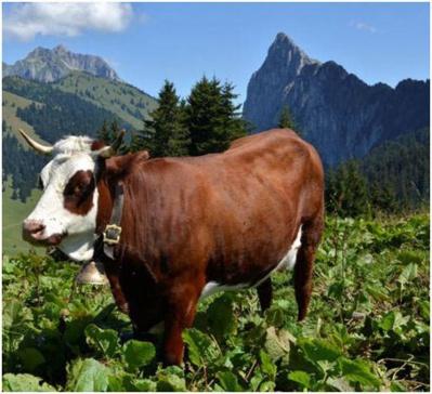 La Route des Fromages de Savoie, richesse du pays savoyard