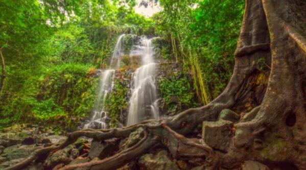 La forêt vierge au Costa Rica - © DR