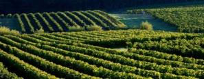 Balades Vendanges sur les terres de Cadillac Côtes de Bordeaux