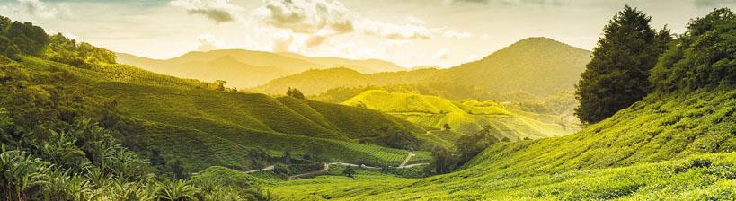 SriLanka - © Safrans du Monde