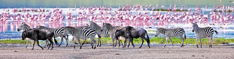 Ngorongoro en Tanzanie - © Safrans du Monde