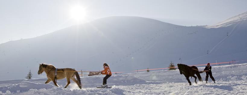 Ski Joering dans le Vercors -© Isère Tourisme