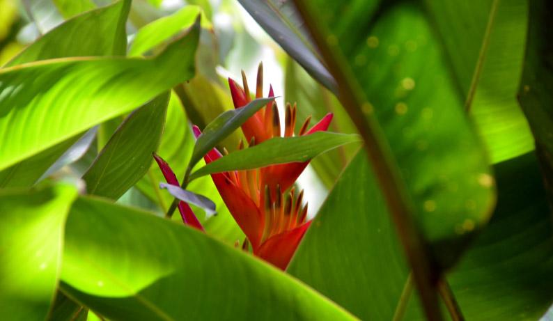 Végétation luxuriante et paradisiaque - © D. Raynal