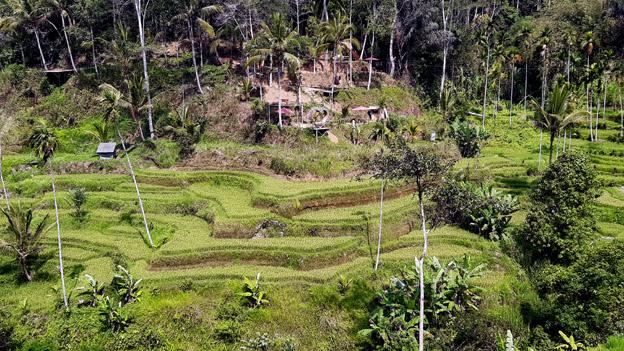 Rizières à Bali - © Jean-Louis Corgier