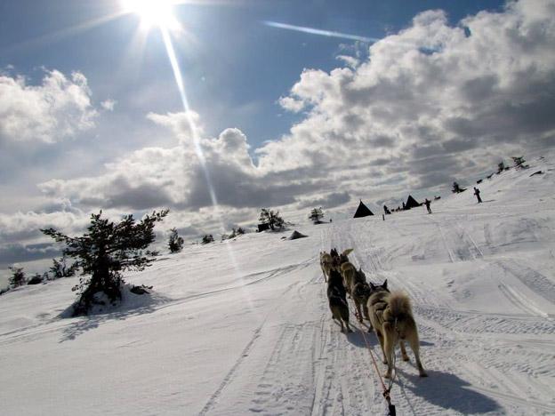 En dehors du ski alpin, créez-vous aux Carroz d'incroyables souvenirs au détour de nombreuses activités : fatbike électrique, luge sur rails, conduite d'attelage de chiens de traîneaux, luge en bande, parapente, patinoire, pisicne à l'Aquacîme © OT Les Carroz