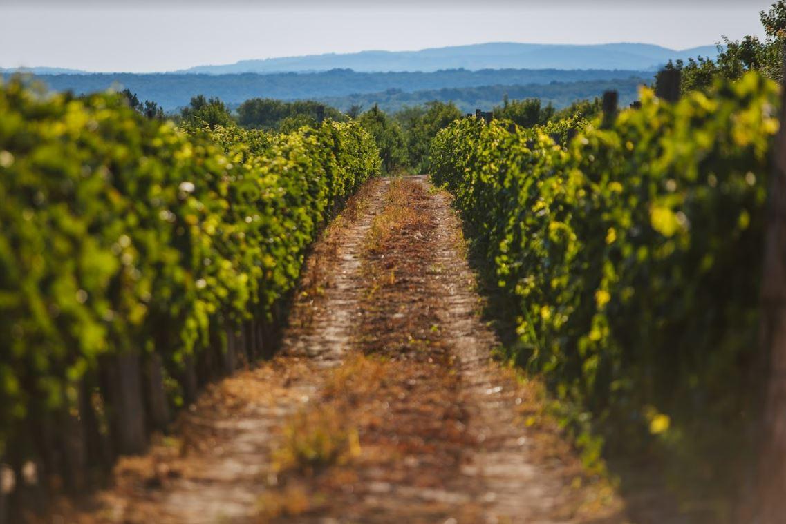Vinotekas dans la région de Fruska Gora - © Luka Sarac