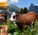 Fromages de la vallée d'Abondance - © PEVA
