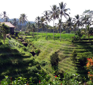 Record pour les français en Indonésie cet été