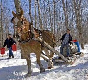 Les cabanes à sucre au Québec, traditions gourmandes