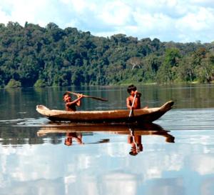 L'extraordinaire biodiversité du Parc Amazonien de Guyane