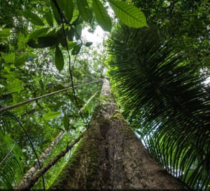 Nouveau site pour le Parc Amazonien de Guyane