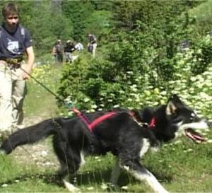 Cani-rando et rafting en Haute-Maurienne (Vidéo)