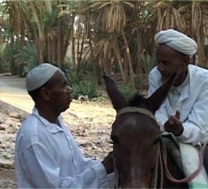 Voyage au Sud Maroc : l'Oasis de Tagmout (Vidéo)