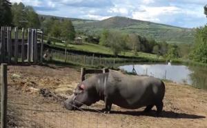 Immersion dans le Parc animalier d'Auvergne