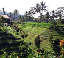 Bali - © JL Corgier