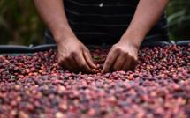 L'Amérique Centrale sait faire un bon café